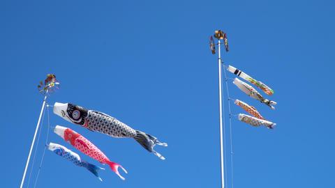 空を気持ちよさそうに泳ぐ鯉のぼり ライブ動画