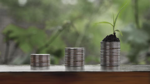 Cinemagraph Growing Money Plant On Coins Footage