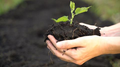 Hand of gardener holding a seedling plant and soil Archivo
