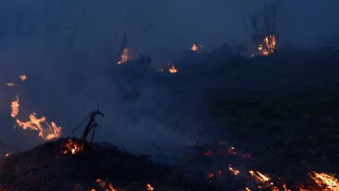 Wildfire while drought at night, close-up. Smoke and air Pollution from Footage
