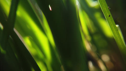 Fresh grass close up on sun rays Live Action
