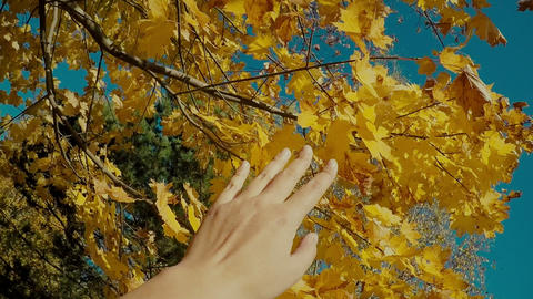 Autumn scene. Hand touching autumn yellow leaves with sun beam over blurred Footage
