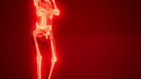 Human Skeleton Radiography Scan Live Action