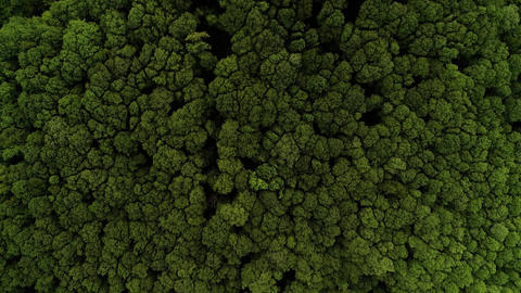 Forest drone shot top down camera moving flying forward tree tops green 2 of 2 continued Live Action