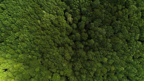 Forest drone shot top down camera moving flying forward tree tops green Live Action