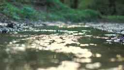 Small river in the forest v5 Footage