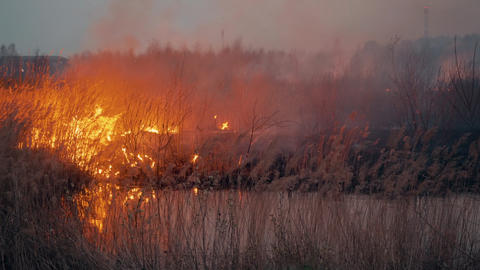 Burning grass on field while forest fire. Dry grass in flame and smoke while Live Action