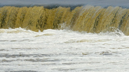 Vimba jumping up a waterfall Footage