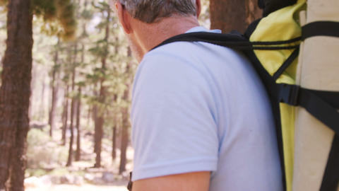 Hiker couple walking through forest Live Action