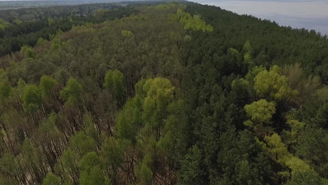 Top view from dron of green forest and blue lake. Amazing nature Footage