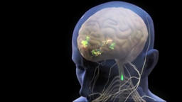 Loop Animaton Showing The Human Nervous System Footage