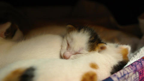 Awakening kitten, baby cat. New born feline, cute animal, pet is in cat house Footage
