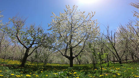 Pass through the spring trees ビデオ