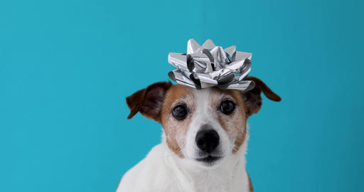 Dog with a bow on his head Archivo