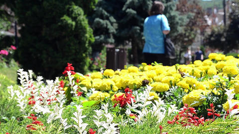 Woman walking in the park along flower beds multiclore 13 Footage