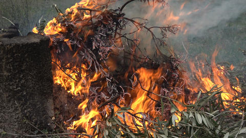 Details of Small Burning Branches Live Action