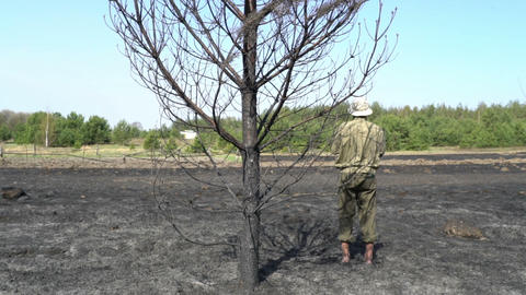 lonely man standing under the burned tree on the field after the wildfire Footage