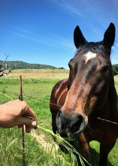Horse and some long grass Photo