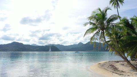 Tropical island paradise palm tree beach video from French Polynesia, Tahiti Archivo