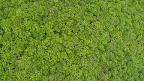 Aerial View of Rotating Forest Footage