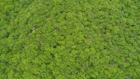 Aerial View of Rotating Forest Stock Video Footage