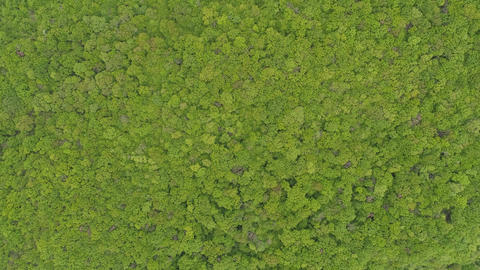 Top View of a Beautiful Forest Footage