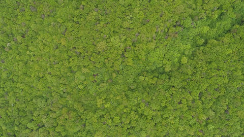 Top View of a Beautiful Forest Stock Video Footage