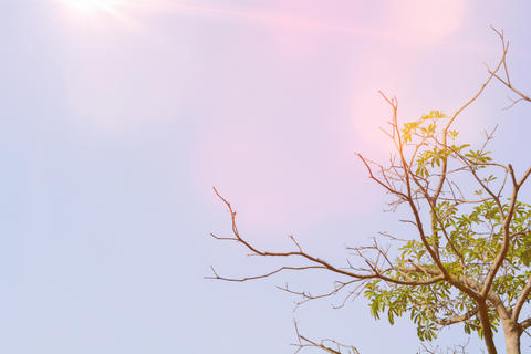 Tree and branches with sun light and sky background