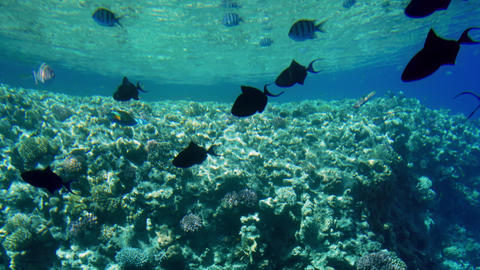 4k video of amazing seascape of coral reef with colorful fishes and anemones Archivo