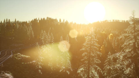 Forest under Sunrise Sunbeams Live Action
