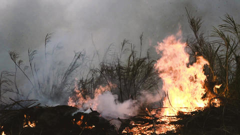 Wildfire while drought close-up flame. Smoke and air Pollution from farm fields Archivo