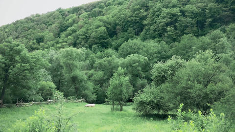 A beautiful mountain with a forest in the distance of a sheep grazing Archivo