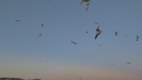 Flying seagulls against evening sky Archivo