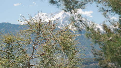 Beautiful natural background. Pine tree branches in focus and winter snowy Live Action