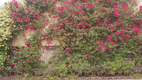Home in garden rose Archivo