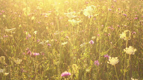 Beautiful meadow in morning sunshine Live Action