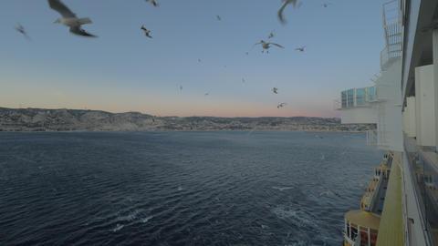 Seagulls following the cruise ship Archivo