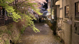 Kyoto, Japan illuminated cherry blossom trees along river in Gion at night Footage
