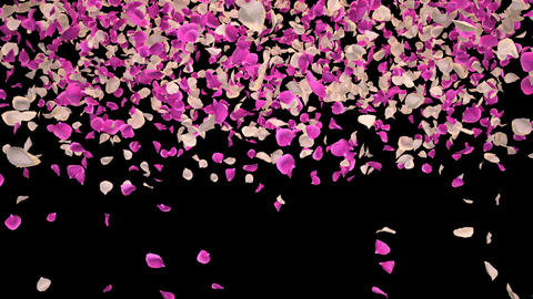 Flying Romantic white pink Rose Flower Petals Falling Alpha Channel transition Animation