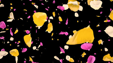 Flying Romantic vibrant colorful Rose Flower Petals Falling Alpha isolated Loop Animation