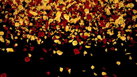 Flying Romantic Yellow red Rose Flower Petals Falling Alpha Channel transition Animation