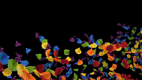 Flying Romantic iridescent colorful rainbow Rose Flower Petals Alpha Loop Animation