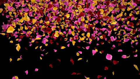 Flying Romantic vibrant colorful Rose Flower Petals Falling Alpha transition Animation