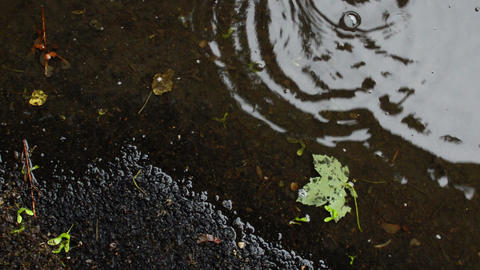 Raindrops Falling Onto Colorful Leaves Laying On Road In Rainy Day Footage