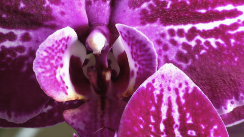 Beautiful Orchid Close Up Archivo