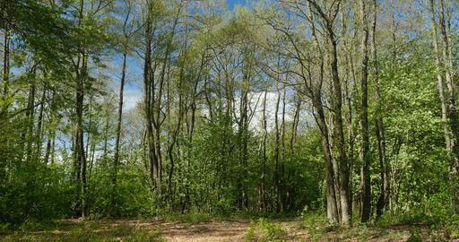 Spring forest landscape Footage