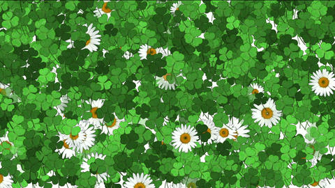 clover & white daisy Animation