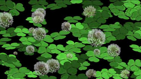 clover & dandelion Animation