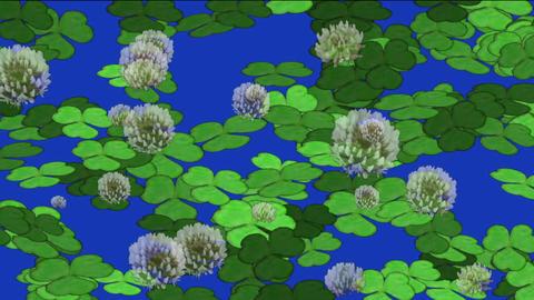 clover & dandelion Stock Video Footage