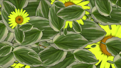yellow daisy flower & leaves,spring scene Animation